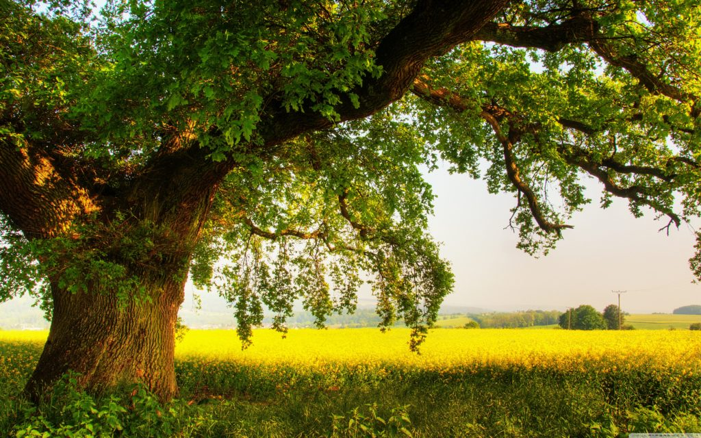 oak_tree_2-wallpaper-3840x2400